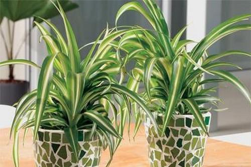 Sandriyana Plant Adahari Com